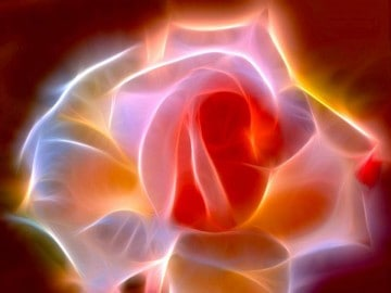 picture of rose with light behind it expressing energy healing