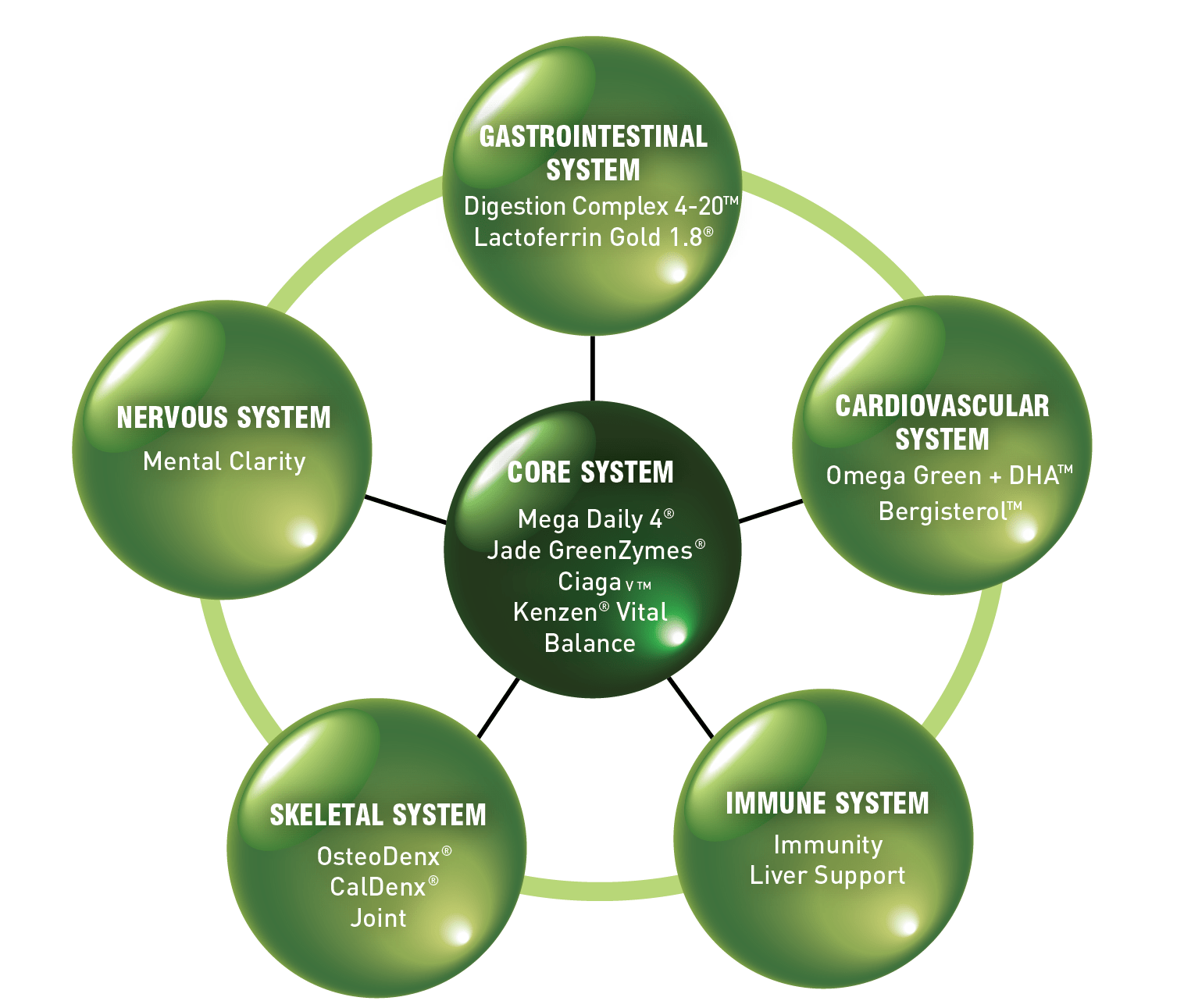 picture showing ring of nutrition for balance and stress reduction