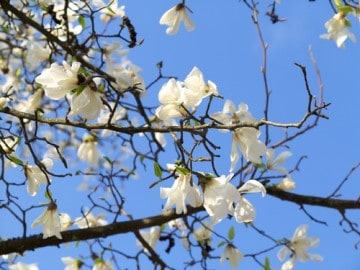 picture of blossoms on branches used with expression of healing testimonials